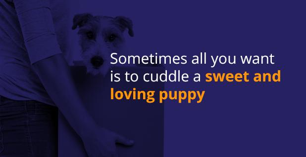 Cuddle a puppy